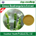 extrato natural Cissus quadrangularis