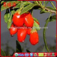 Goji berry em capsulas goji berry preco frutto di goji