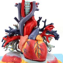 HEART01 (12477) Medical Anatomy Pulmão Anatômico Humano Transparente com Modelo de Coração