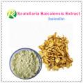 Extracto de alta calidad de Scutellaria Baicalensis Baicalin