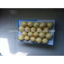 Hochwertige frische Ya-Birne aus Birnenfabrik