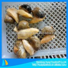 Cooked whelk meat(Buccinum Undatum)