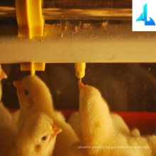 Poultry drinking system for chicken house