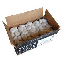 New Crop Pure White Garlic