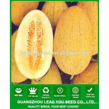 Preços de sementes de melão doce oval amarelo NSM18 Dianna