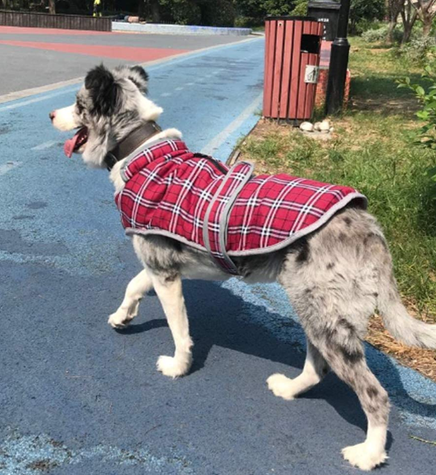 British Plaid Dog Coats for Medium Large Dogs