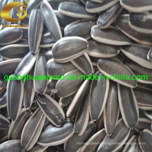 Export Quality Sunflower Seeds From Shandong Manufacture