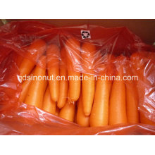 Экспорт Индонезии Морковь