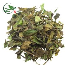 Té blanco orgánico fresco de Pai Mu Tan del chino