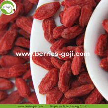 Fuente de la fábrica Super Food Dried Goji Berry Fruit