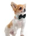 3 Farbe 4 Größe Hund Haustier Fliege Bandana Zubehör Großhandel China