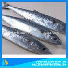 Bonne qualité poissons congelés maquereau espagnol