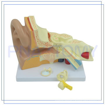 PNT-0670 Modelo de ouvido humano de alta qualidade ampliado
