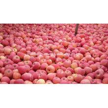 Pomme rouge chinoise fraîche de haute qualité