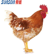 Feed enzymes for broiler poultry additive