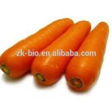 Zanahoria seca a granel
