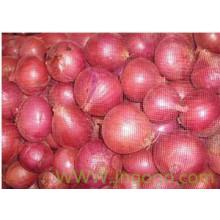 Export Hochwertige neue Ernte Rote Zwiebel