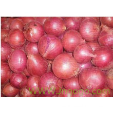 Export High Quality New Crop Red Onion