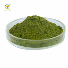 Water Soluble Green Barley Grass Extract Powder