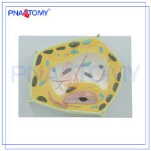 PNT-0835 Auxílios de ensino biológico Modelo de célula vegetal