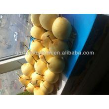 2013 neue Ernte frische Birne