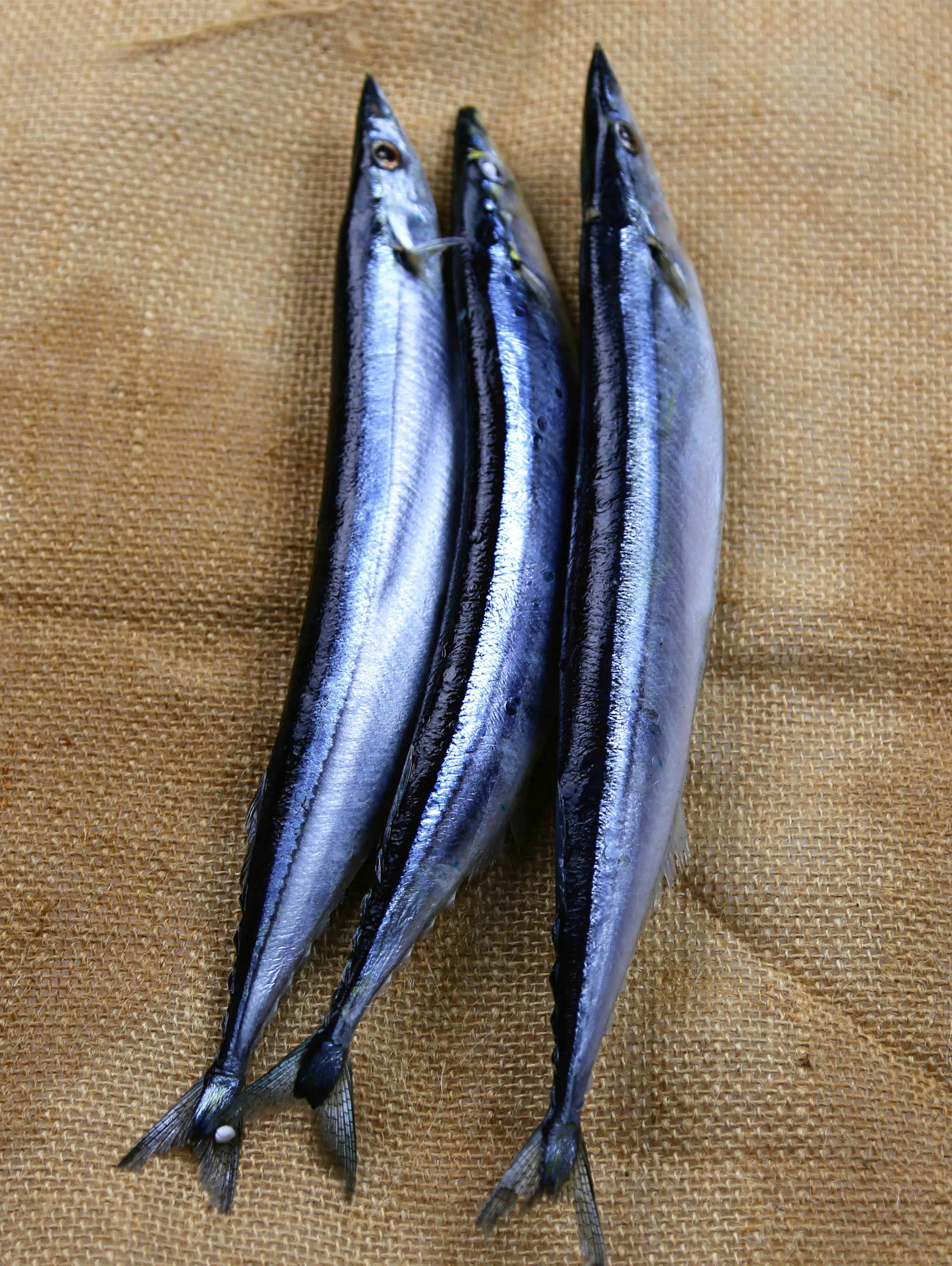 Well Selling Frozen Pacific Saury