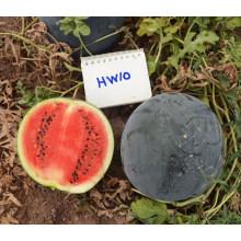HW10 Yuxu grande rodada preto F1 híbrido chinês melancia sementes para venda
