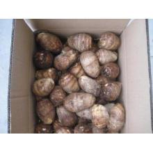 Taro fresco de boa qualidade nova colheita para venda
