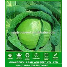 NC54 Yaoku China sementes de repolho para o plantio, preços de sementes de repolho