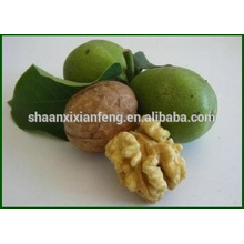 Chinese No Pesticide Organic Natural Walnut Kernel
