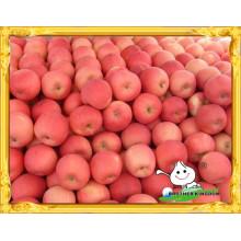 Red manzana fresca fuji precio bajo / chino rojo fuji manzana / Red dulce dulce manzana