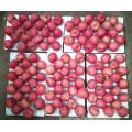 2016 New Fresh Fruits Red FUJI Apple