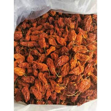 Premium Hottest Ghost Red Chili con tallo