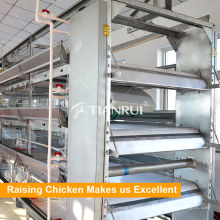 Tianrui automatic belt type chicken poultry manure removal system
