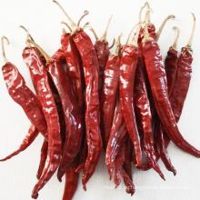 Gute Qualität getrocknete rote heiße Chilli