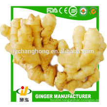2014 new crop market price for fresh ginger export to US market