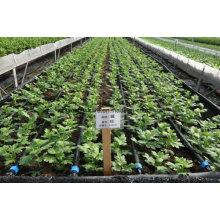 Fita de gotejamento agrícola para irrigação de jardim