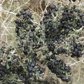 Medlar Certified Gojivberry Organic Black Goji Berry