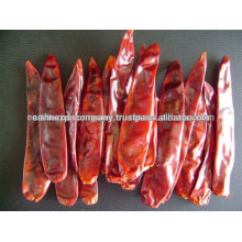 INDIAN LEADING CHILLI SUPPLIER
