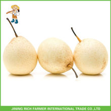 Wholesale High Quality China Fruit Sweet Fresh Ya Pears