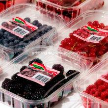 Bandeja plástica desechable respetuosa del medio ambiente del alimento para la carne de la fruta (bandeja de los PP)