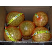 Pomelo frais de miel de nouvelle récolte
