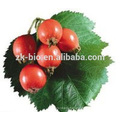 GMP Supplier Bottom Price Rose Hip Extract powder
