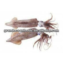frozen squid(Loligo Japonica)