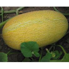 RSM05 Wobi tamanho pequeno híbrido super doce hami sementes de melão