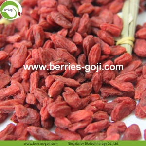 Fuente de la fábrica Natural Fruit Super Food Goji Berries