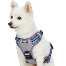 Multi-Colored Stripe Dog Harness