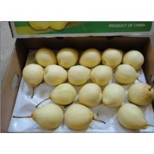 2016 Fresh Ya Pear Hot Sale
