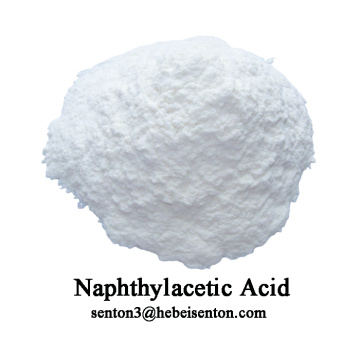 Hormone tổng hợp Hormone Naphthylacetic Acid