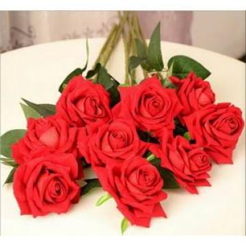 Single Head Rose of Marriage Flower